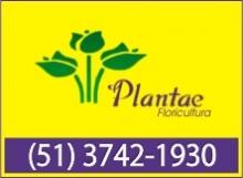 B4 RS Plantae Floricultura - Sobradinho - RS
